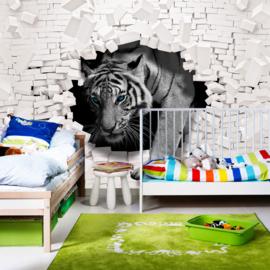 Fotobehang poster 3309 dieren tijger met blauwe ogen breekt door witte stenen muur