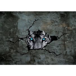 Fotobehang poster 1256 dieren tijger kop blauwe ogen beton wand