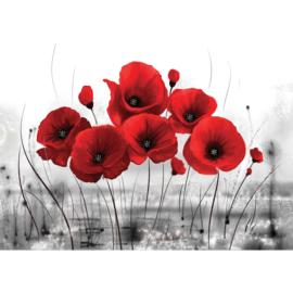 Fotobehang poster 0646 klaprozen rood bloemen