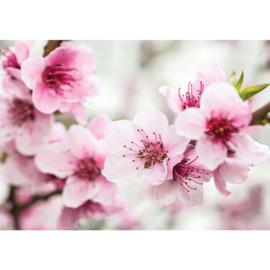 Fotobehang poster 2106 bloemen roze