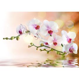 Orchidee vlies fotobehang 400 x 280