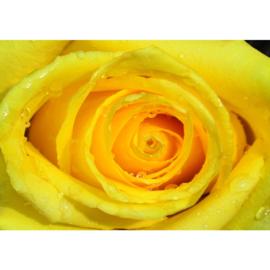 Fotobehang poster 1934 bloemen roos rozen geel