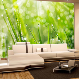 Fotobehang poster 0199 gras druppels groen natuur