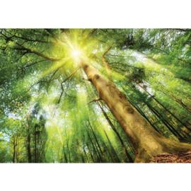 Fotobehang poster 3225 bomen bos zon groen