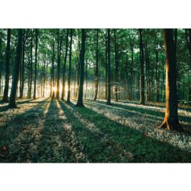 Fotobehang poster 0641 bomen bos gras groen