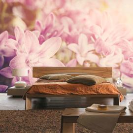 Fotobehang poster 0195 bloemen