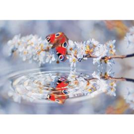Fotobehang 271 vlinder 368 x 254
