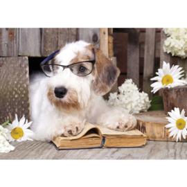 Fotobehang poster 3308 dieren hond bril boek