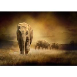 Fotobehang poster 0011 dieren olifant kudde olifanten