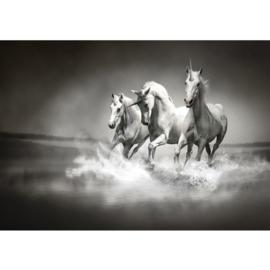 Fotobehang poster 1016 dieren paarden unicorn eenhoorn witte paarden zwart wit