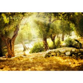 Fotobehang poster bos stenen bomen natuur 0265