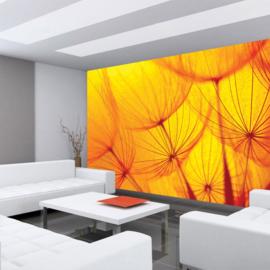 Fotobehang poster 1072 bloemen paardenbloem oranje