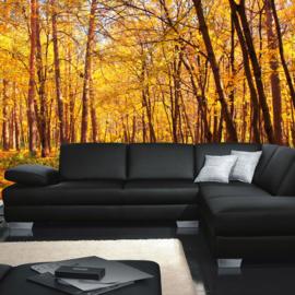 Fotobehang 0084 bos bomen natuur herfst bladeren geel oranje