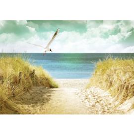 Fotobehang poster 4585 duinen strand zee dieren meeuw vogel