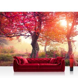 Fotobehang poster 0242 boom bomen rood natuur bos herfst