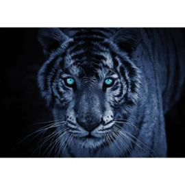 Fotobehang poster 1476 dieren tijger kop roofdier