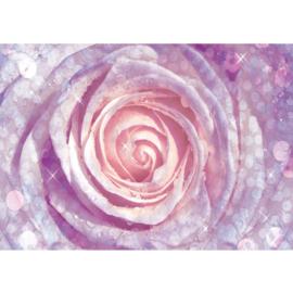 Fotobehang poster 0602 roos roze bloem