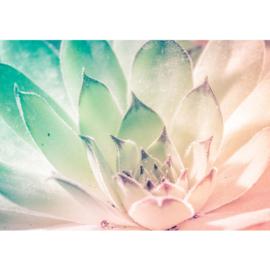 Fotobehang poster 2146 bloemen waterlelie