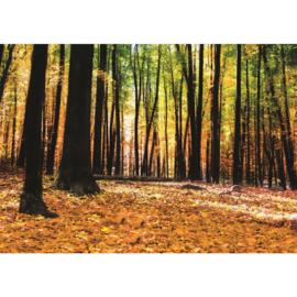 Fotobehang poster 3007 bomen bos herfst