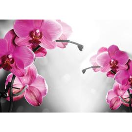 Fotobehang poster 1802 bloemen orchidee paars roze