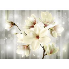 Fotobehang poster 1284 bloemen magnolia wit