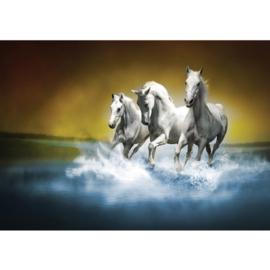 Fotobehang 1014 Paard 400 x 280
