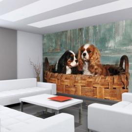 Fotobehang poster 4502 dieren hond cocker spaniel puppy