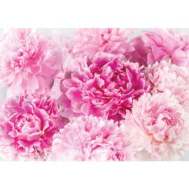 Fotobehang poster 2259 bloemen roze