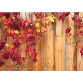 Fotobehang poster 0532 hout bladeren herfst planten