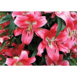 Fotobehang poster 2048 bloemen kelk tropisch roze
