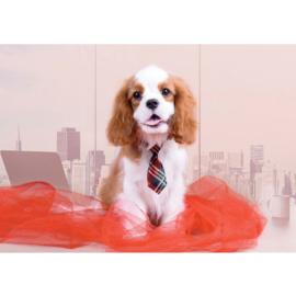 Fotobehang poster 4503 dieren hond cocker spaniel puppy stropdas