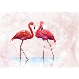 Fotobehang poster 3261 dieren vogels flamingo roze