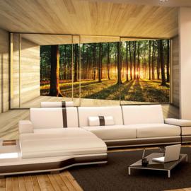 Fotobehang poster 1277 uitzicht van binnen naar bos bomen