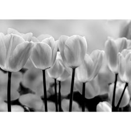 Fotobehang poster 1878 bloemen wit tulpen