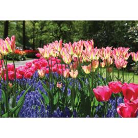 Fotobehang poster 2047 bloemen bollenvelden tulpen