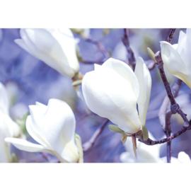 Fotobehang poster 2883 bloemen magnolia wit