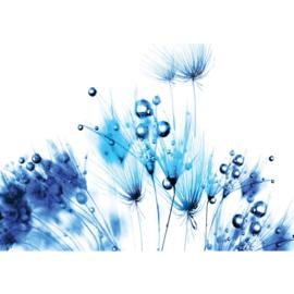 Fotobehang poster 0789 bloemen planten blauw