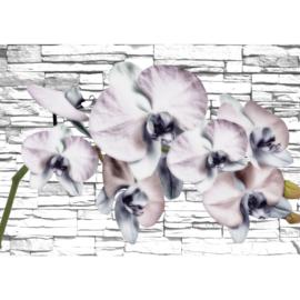 Fotobehang poster 1213 bloemen orchidee wit stenen muur