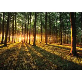 Fotobehang poster 0639 bomen bos gras groen