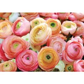 Fotobehang poster 0678 rozen roze bloemen