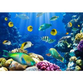 Underwater world vissen 400 x 280