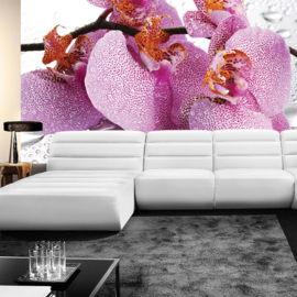 Fotobehang poster 0526 bloemen planten orchidee roze