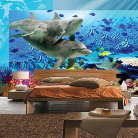 Fotobehang  poster 2092 dieren dolfijn onderwater zee koraal vissen