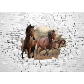 Fotobehang poster 3383 dieren paard bruin stenen muur wit