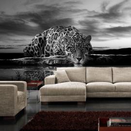 Fotobehang poster 0614 tijger natuur wilde dieren zwart wit