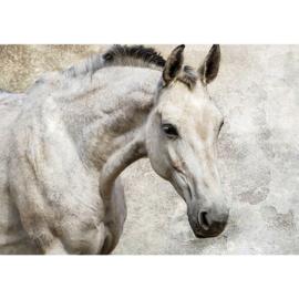 Fotobehang 2206 Paard 254 x 184