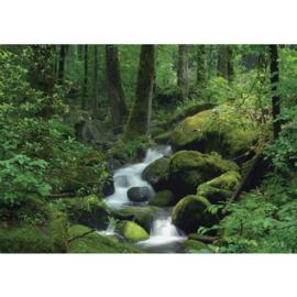 Fotobehang poster 0446 bos groen bomen water waterval rotsen planten