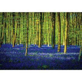 Fotobehang poster 2255 bomen planten blauw groen bos