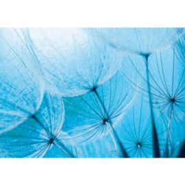 Fottobehang poster 1075 bloemen paardenbloem blauw