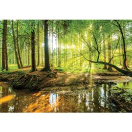 Fotobehang poster 3355 bos bomen natuur